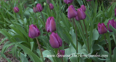 Are You Ready For Spring Gardening?