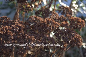 Signs of Spring and Greenhouse Updates