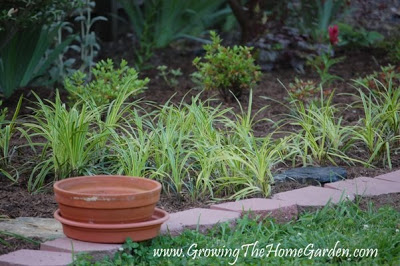 Gardening with Variegated Liriope
