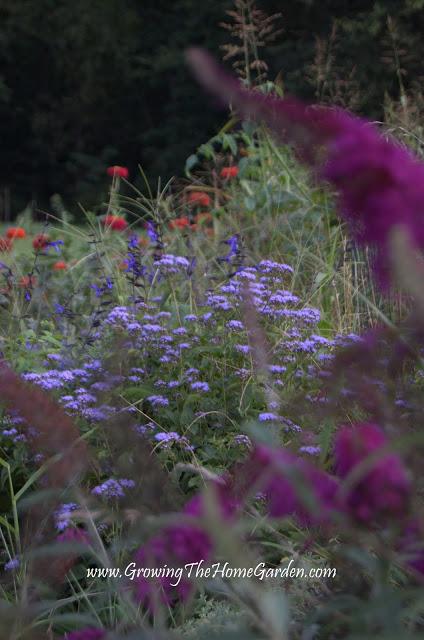Perennials Around the Vegetable Garden