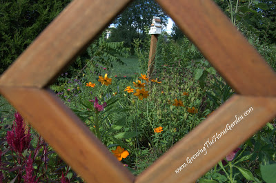 Framing the Cosmos – Photo Post