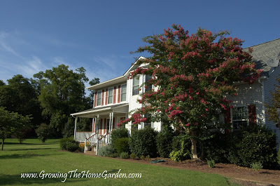 How a Crape Myrtle Should Be Pruned