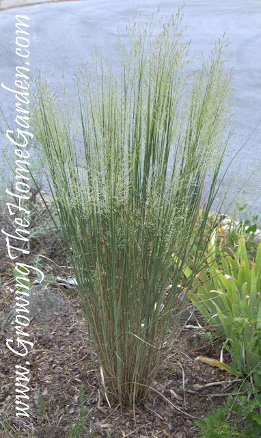 A Switchgrass Followup