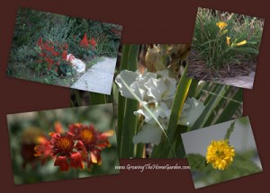 Garden Blogger Posts of the Week Vol.5