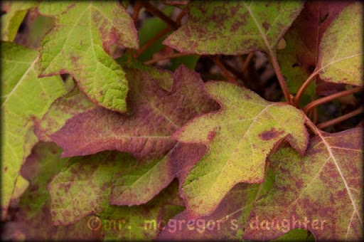 The First Colors of Fall – The Fall Color Project 2010
