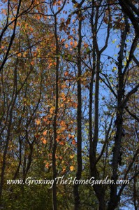 Fall Color in the Tree Line