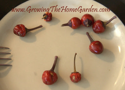 How to Extract Seeds from Ornamental Peppers