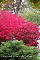 Shrubs for Fall Color (Fall Color Project 2010)