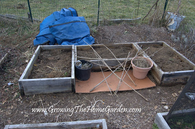 rearranging a raised bed vegetable garden