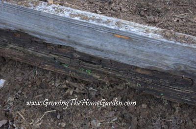 old rotting wood from a raised bed