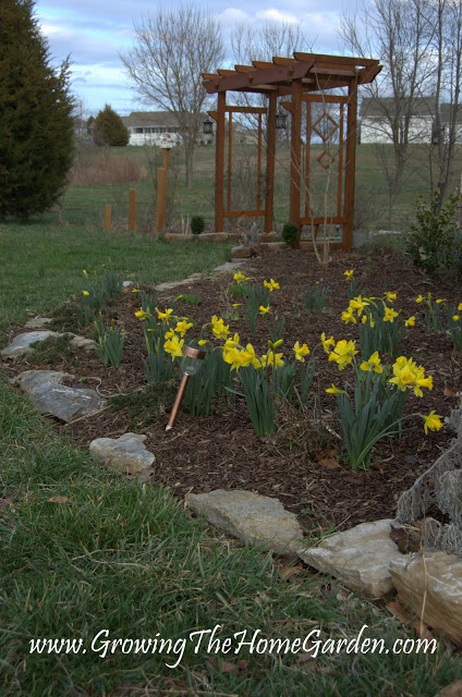 The Arbor, Daffodils, and the Front Garden