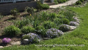 Creeping Phlox and Border Rocks