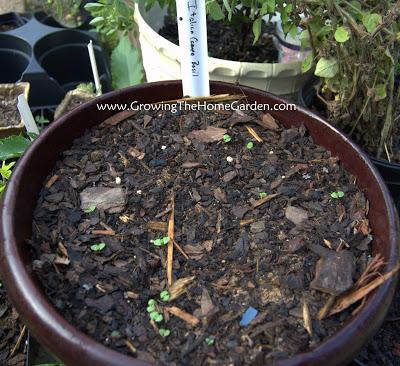 Seed GROW 2011
