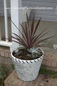 Simple Potting Arrangement for the Front Porch