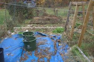The November Vegetable Garden