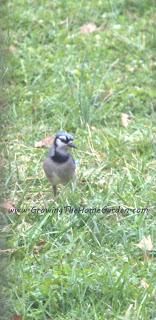 A Little Birdwatching