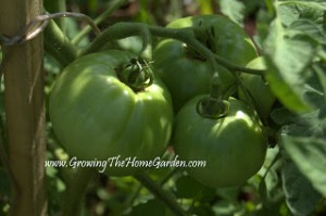 One Critical Thing to Do For Your Vegetable Garden This Summer!