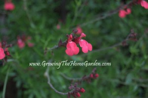 Drought Tolerant Plants and Photos Around the Gardens