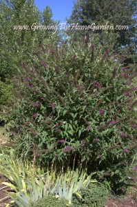 Drought Tolerant Garden Plants