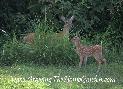 Creating a Deer Resistant Shade Garden!  (Part 1)