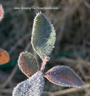 A Frosty December Morning