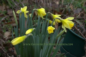 What's Blooming in The Home Garden in February?