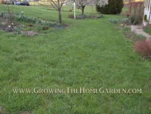 Tips for Creating an Organic Lawn