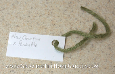 Homemade Plant Tags for Hybridizing Plants