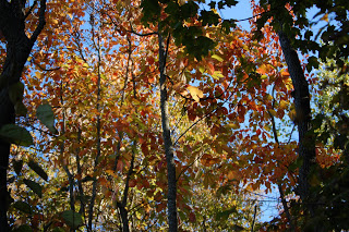 Fall-Color-Scenes-11-2008-5