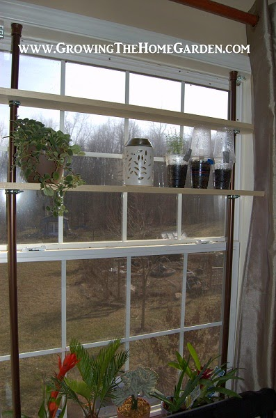 A Window Garden with Shelves