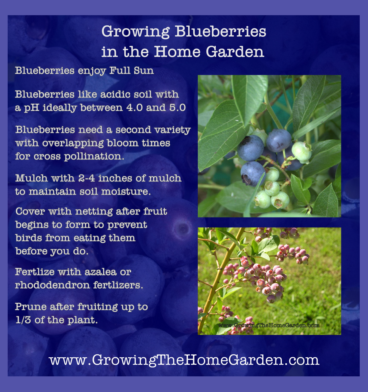 Growing Blueberries in the Home Garden - Growing The Home ...