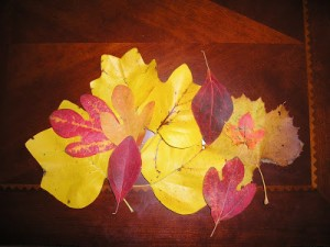 What You Shouldn't Do With Your Fall Leaves