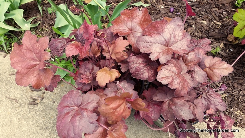 Monrovia Plants - GrowingTheHomeGarden 4-12-2017