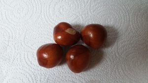 Aesculus pavia red buckeye seeds