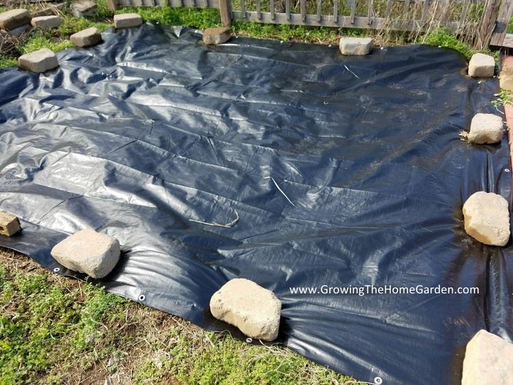 black plastic tarp in the garden to kill off weeds