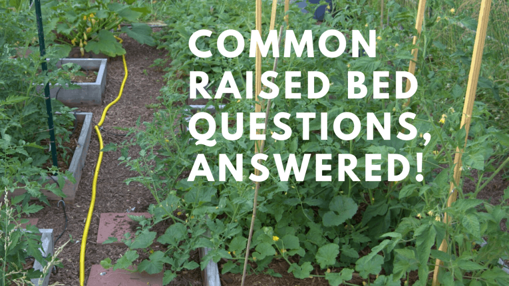 raised bed garden questions answered tips