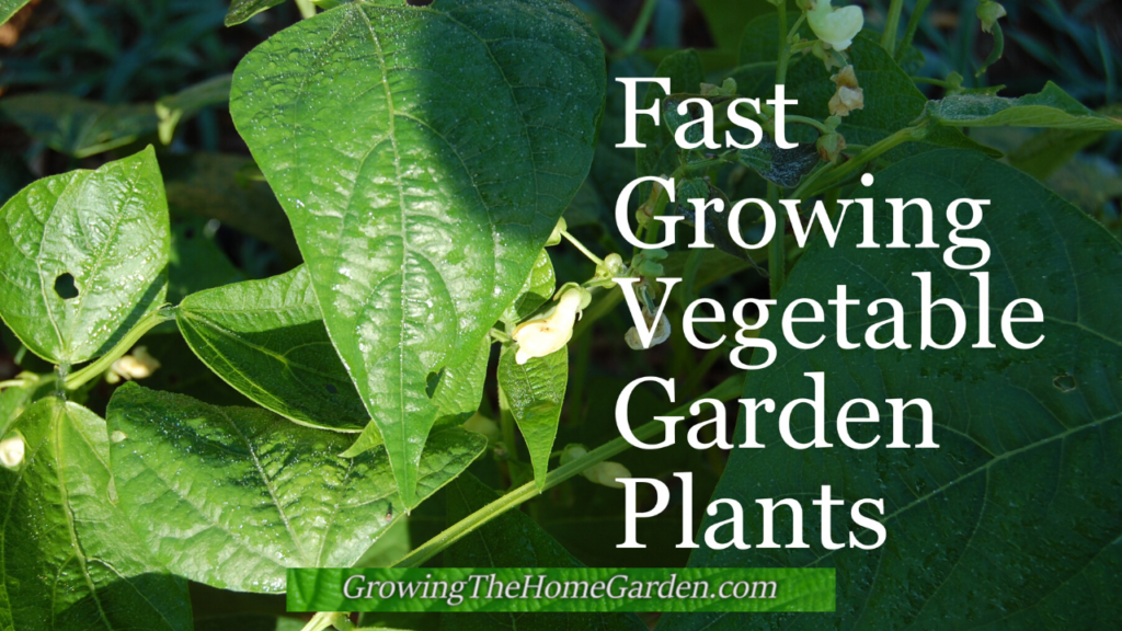 Fast Growing Vegetable Garden Plants