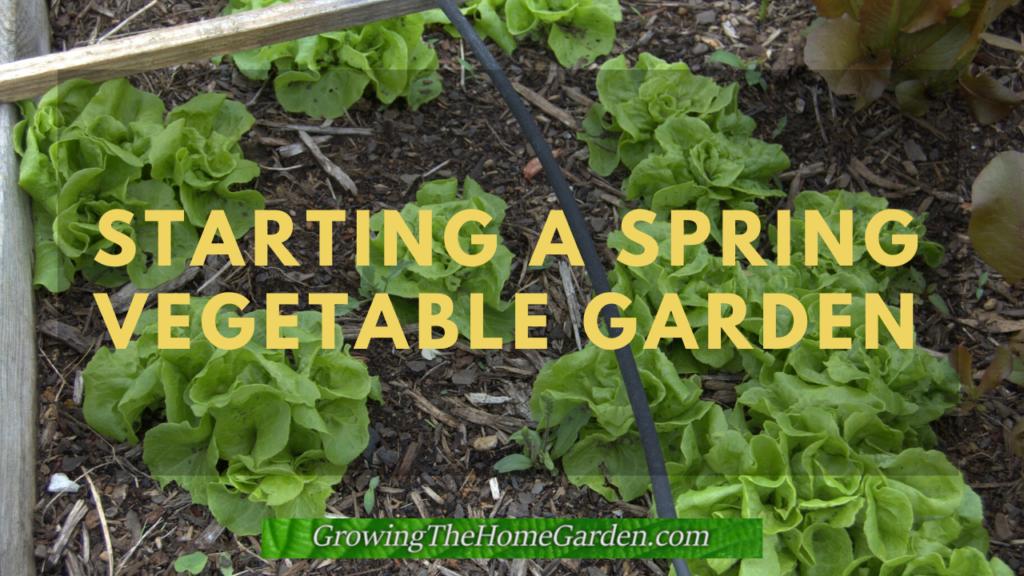 Starting a Spring Vegetable Garden